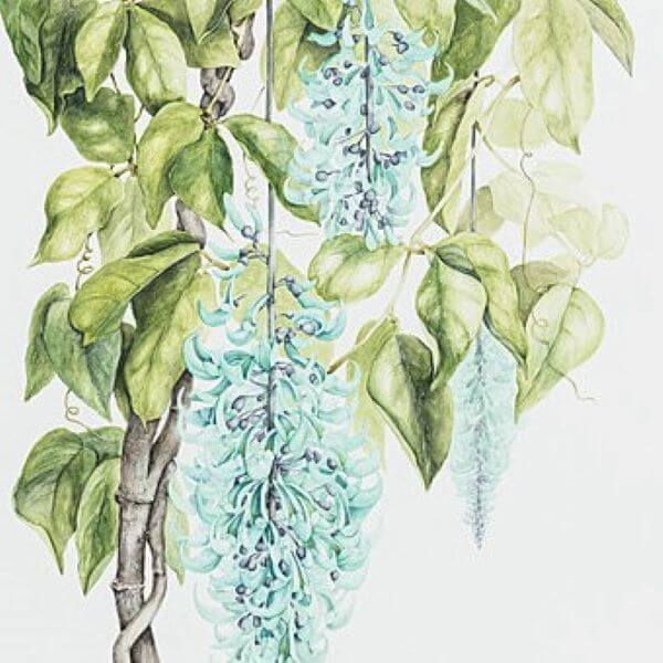 CAG – Adults Botanical Drawing & Painting with Julie McEnerny