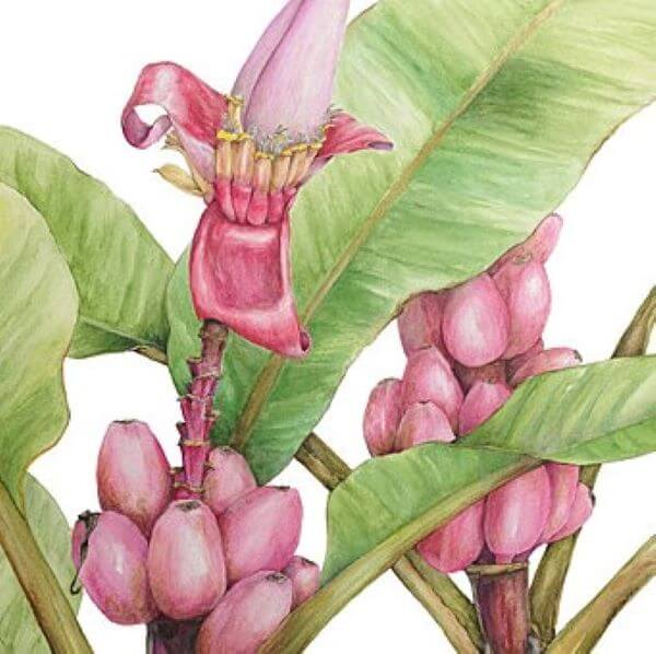 Botanical Drawing & Painting with Julie McEnerny