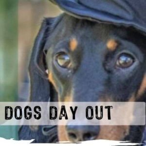 Dogs Day Out
